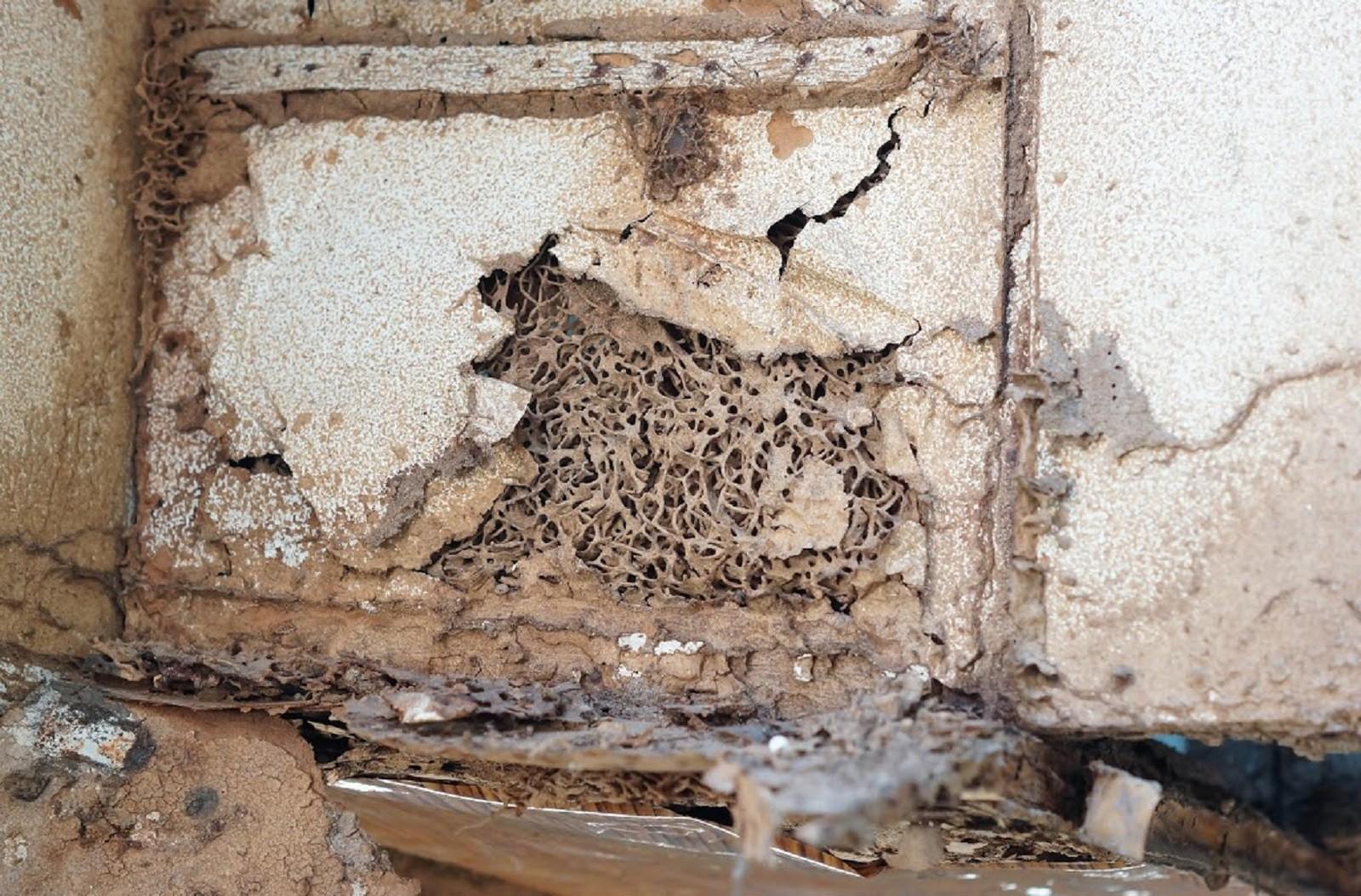 Service Termite Control