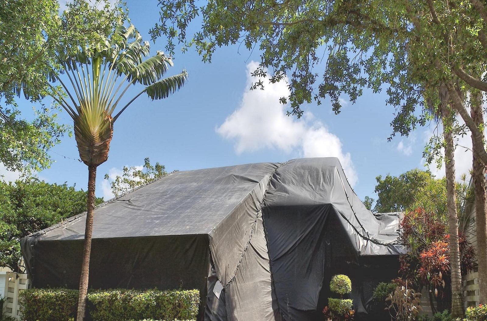 Service Termite Treatment